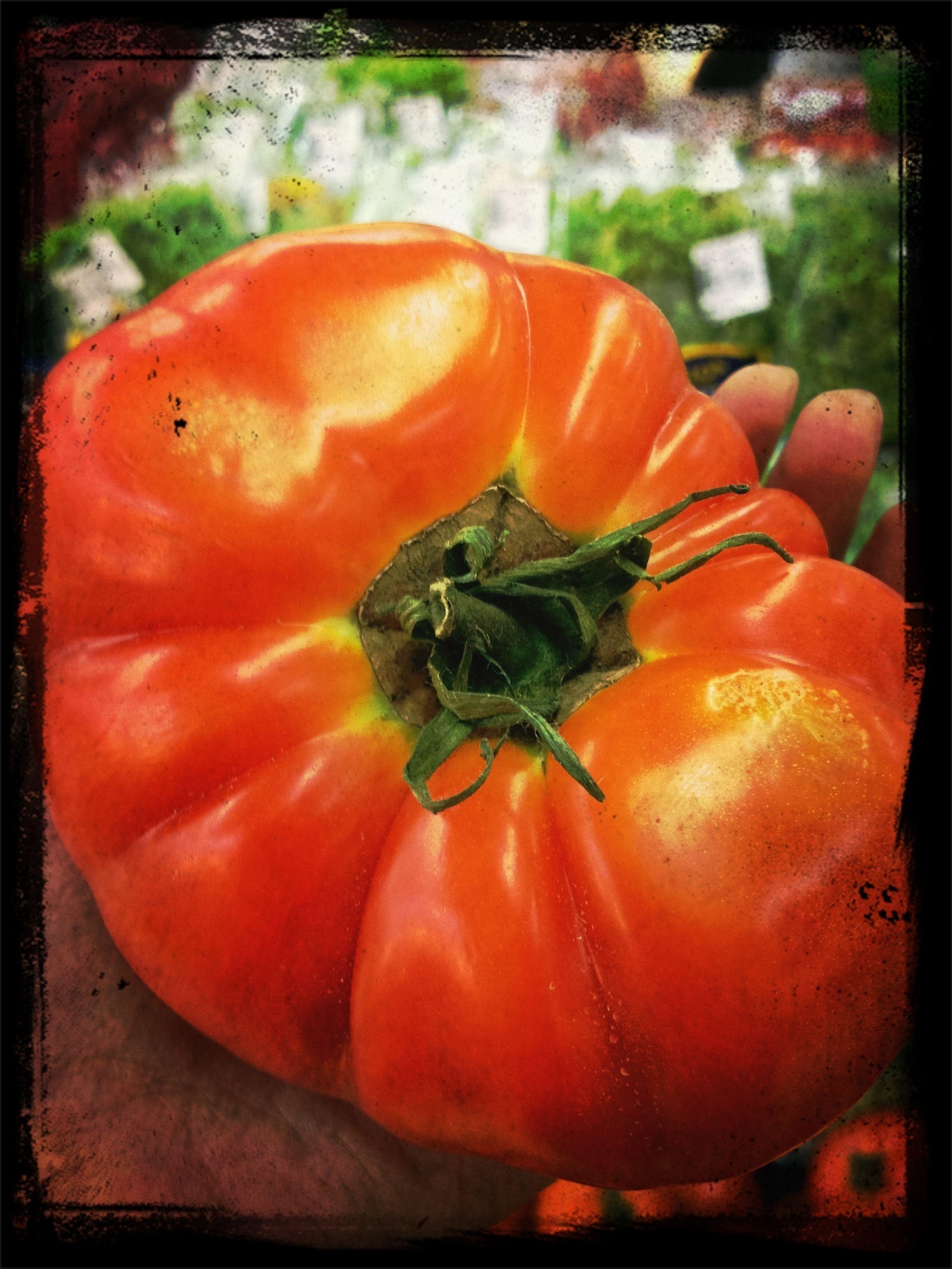 I see tomato Vegetarian Food Fresh Tomato EyeEm Best Shots