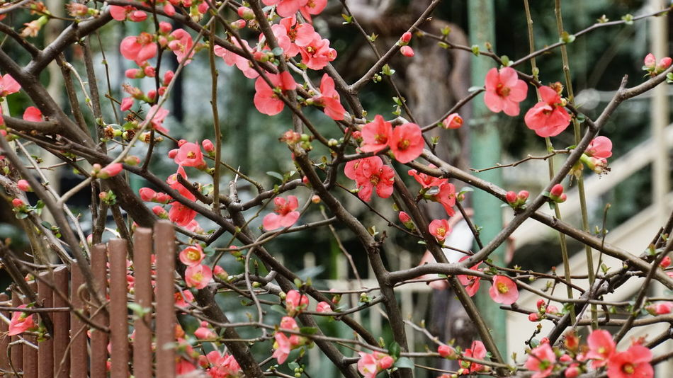Growth Flower Tree Nature Branch Beauty In Nature Day