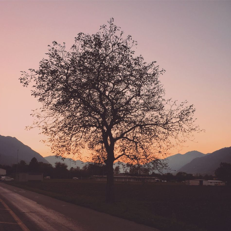 Good evening Tree Nature Sunset Beauty In Nature Tranquil Scene Sky Scenics Mountain