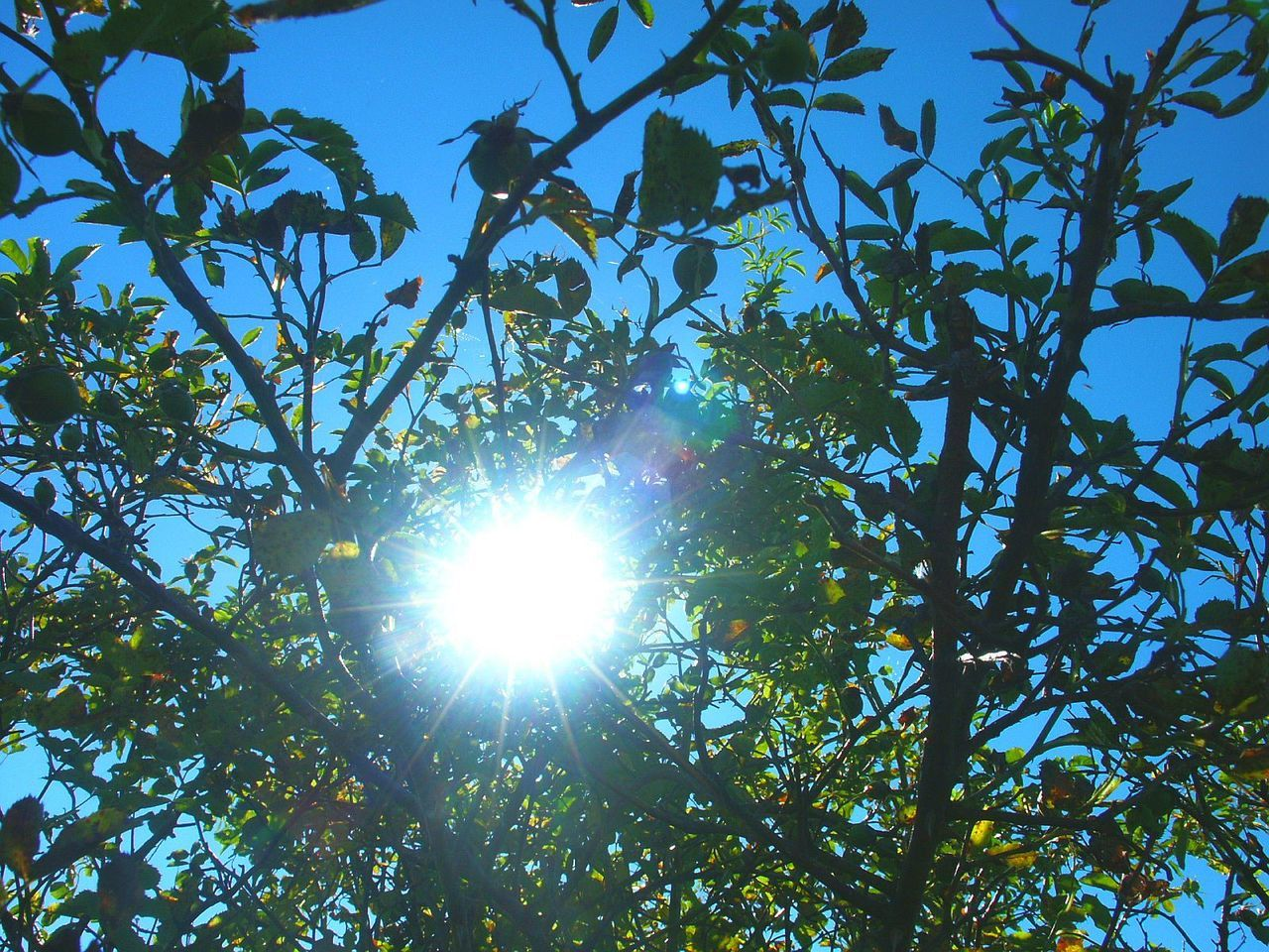 Beauty In Nature Blue Branch Bush And Light Clear Sky Day Freshness Growth Leaf Lens Flare Low Angle View Nature No People Outdoors Scenics Sky Sun Sunbeam Sunlight Tranquility Tree