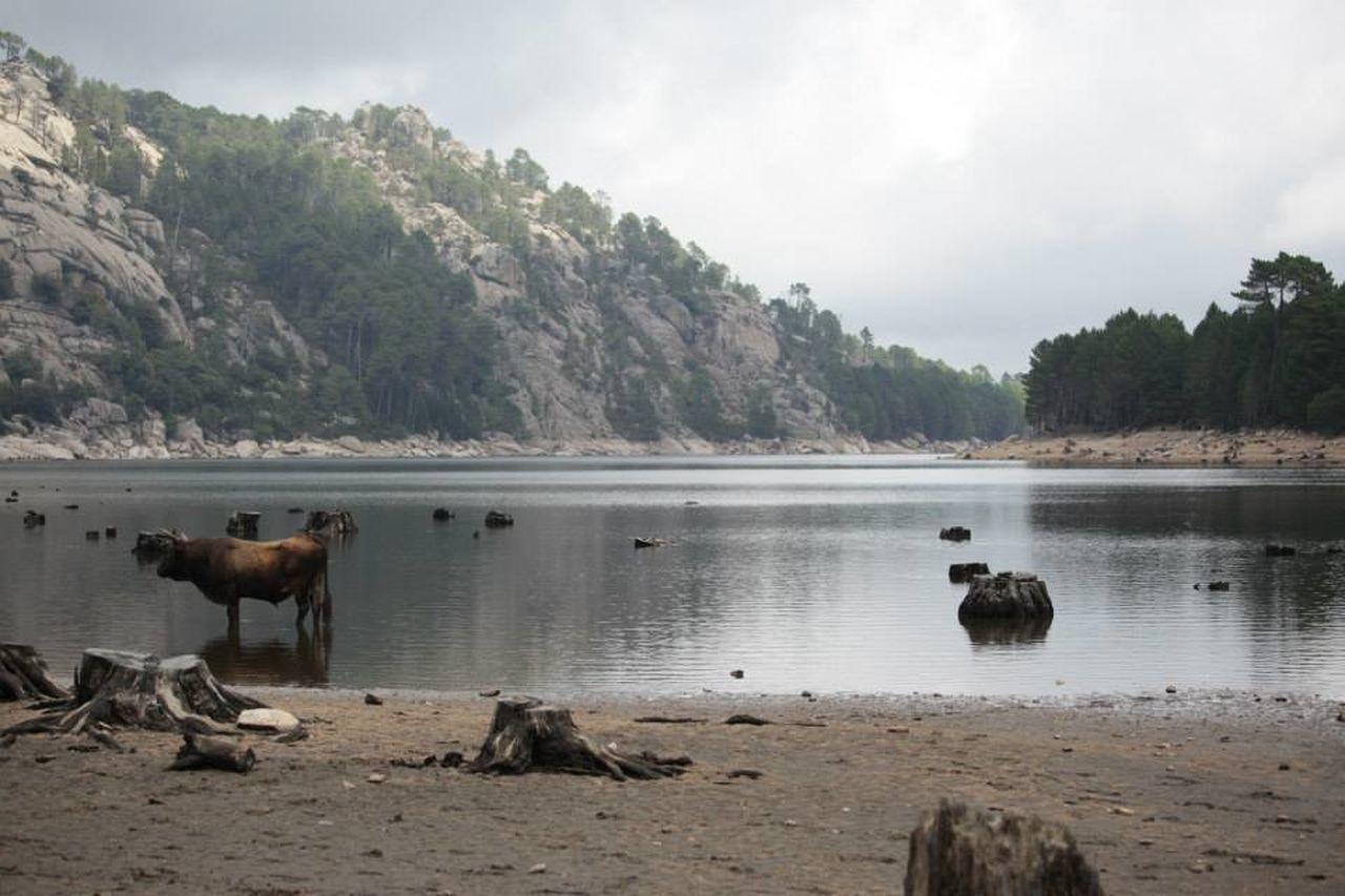 Into the Wild Col De Bavella Corsica Mucca Natura Wild