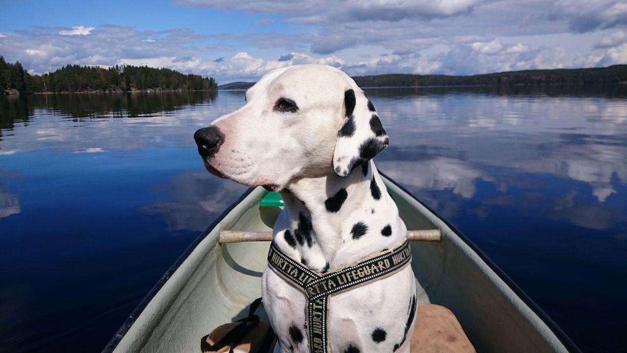 Dog Dalmatian Water Canoe Norway