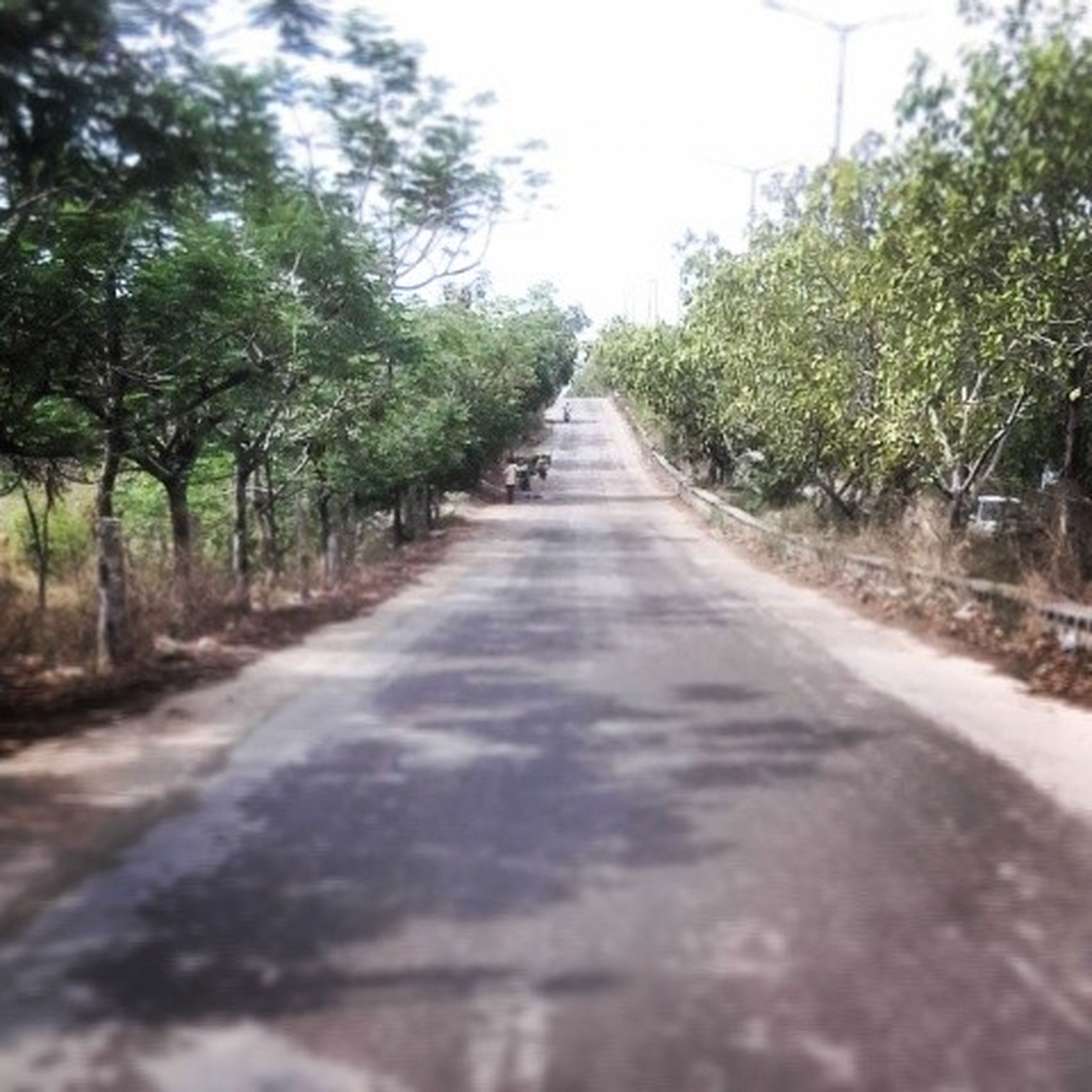 the way forward, diminishing perspective, tree, vanishing point, transportation, road, long, growth, tranquility, clear sky, surface level, nature, tranquil scene, empty road, day, outdoors, no people, green color, treelined, sky