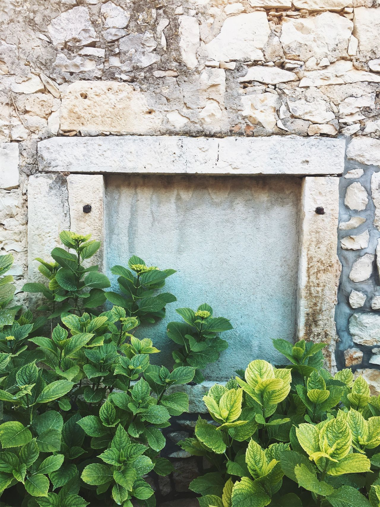 Istrian summer vibes. Plant Architecture Growth Built Structure Green Color Leaf Outdoors Building Exterior No People Day Ivy Nature Close-up