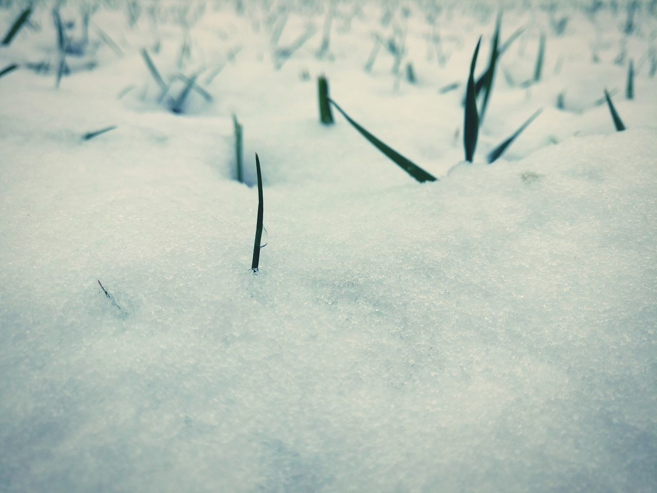Nature Beauty In Nature Winter Cold Temperature Winter Is Coming Frozen Grass First Snow Of The Season