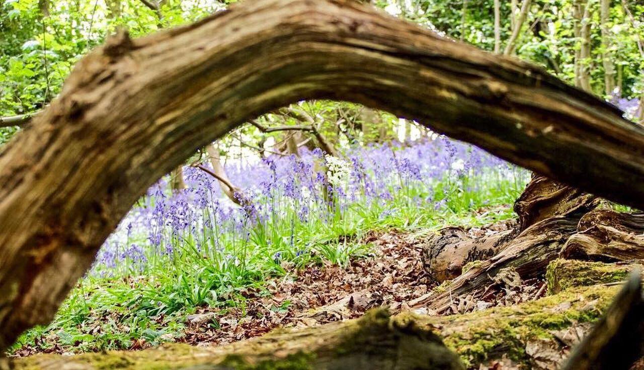 Bluebell Wood Northumberland Walk Nature Canonphotography