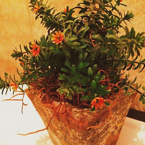 ? Decoration House Miniature Tree First Eyeem Photo