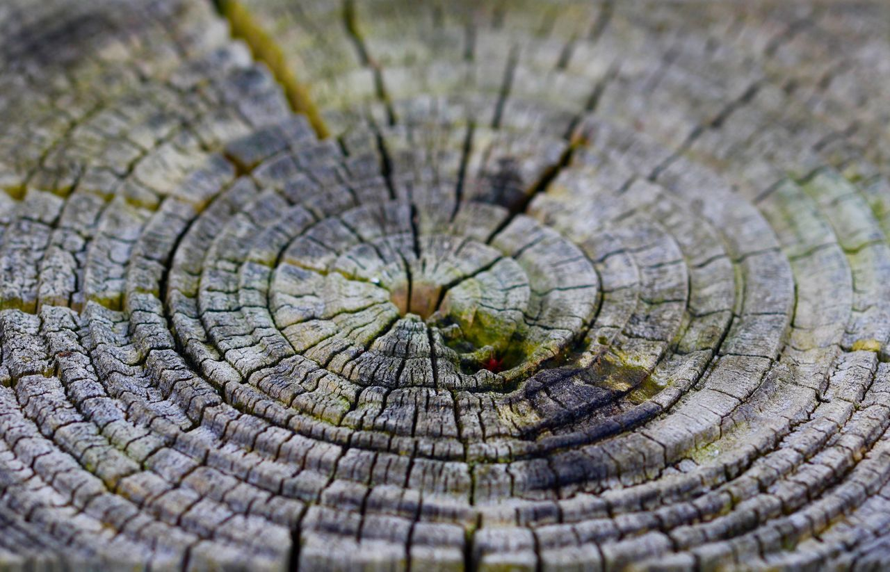 Beauty In Ordinary Things Concentric Fence Posts Pattern, Texture, Shape And Form Wood - Material