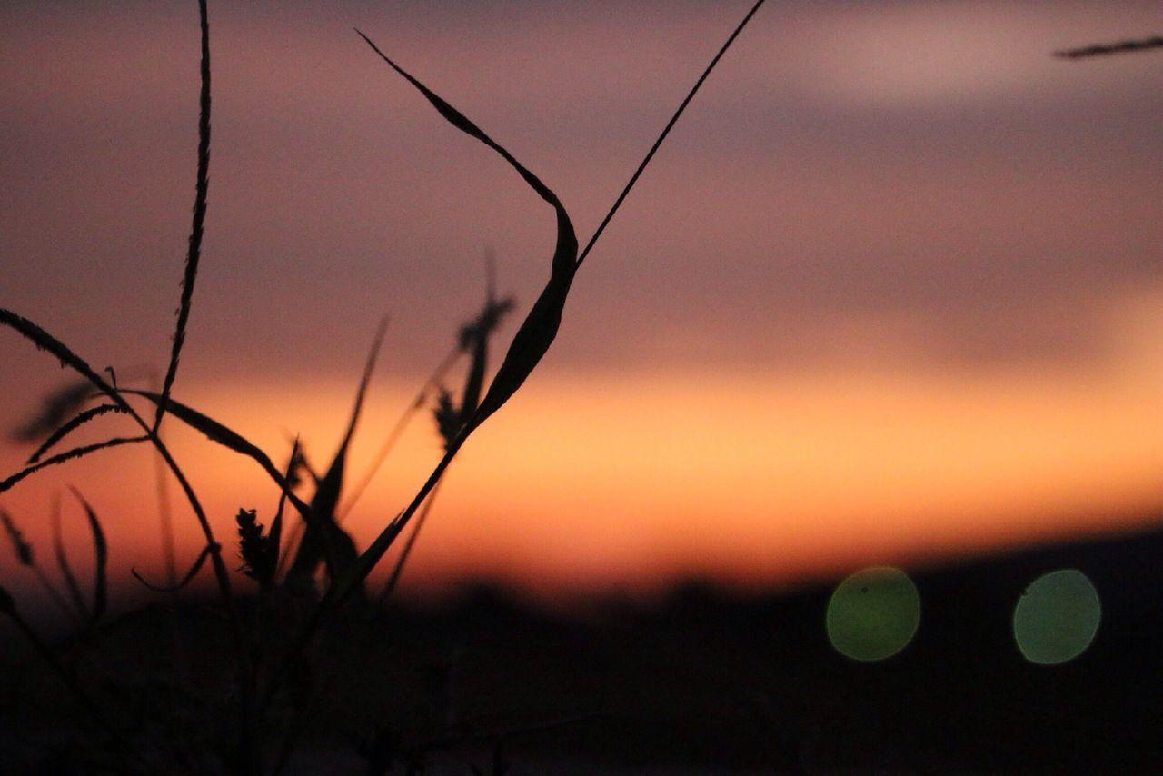 Beautiful stock photos of peace, Grass, Nature, No People, Orange Color