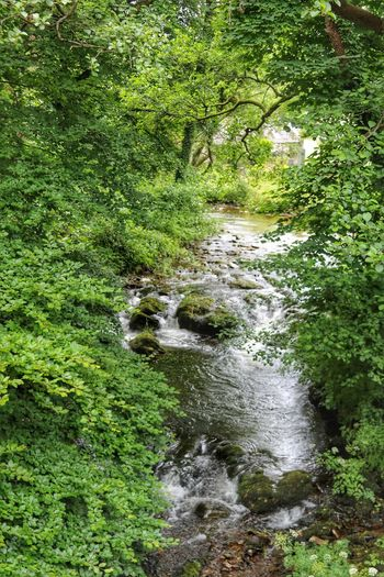 part of my journey.... Relaxing Taking Photos Water - Collection Connected With Nature Somerset England TheVille Streamzoofamily Friends Streamzoofamily EyeEm Best Shots - Nature Eye Em Nature Lover Naturephotography Depth Of Field Nature_collection Walk This Way The Essence Of Summer Nature's Diversities Nature On Your Doorstep Nature The Greatest Artist Green Nature Sky And Sea Hugging A Tree BrendonEastLyn