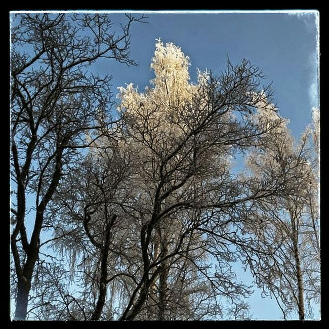 My Country In A Photo Finland Winter Trees Tree Nature Photography Frostopia