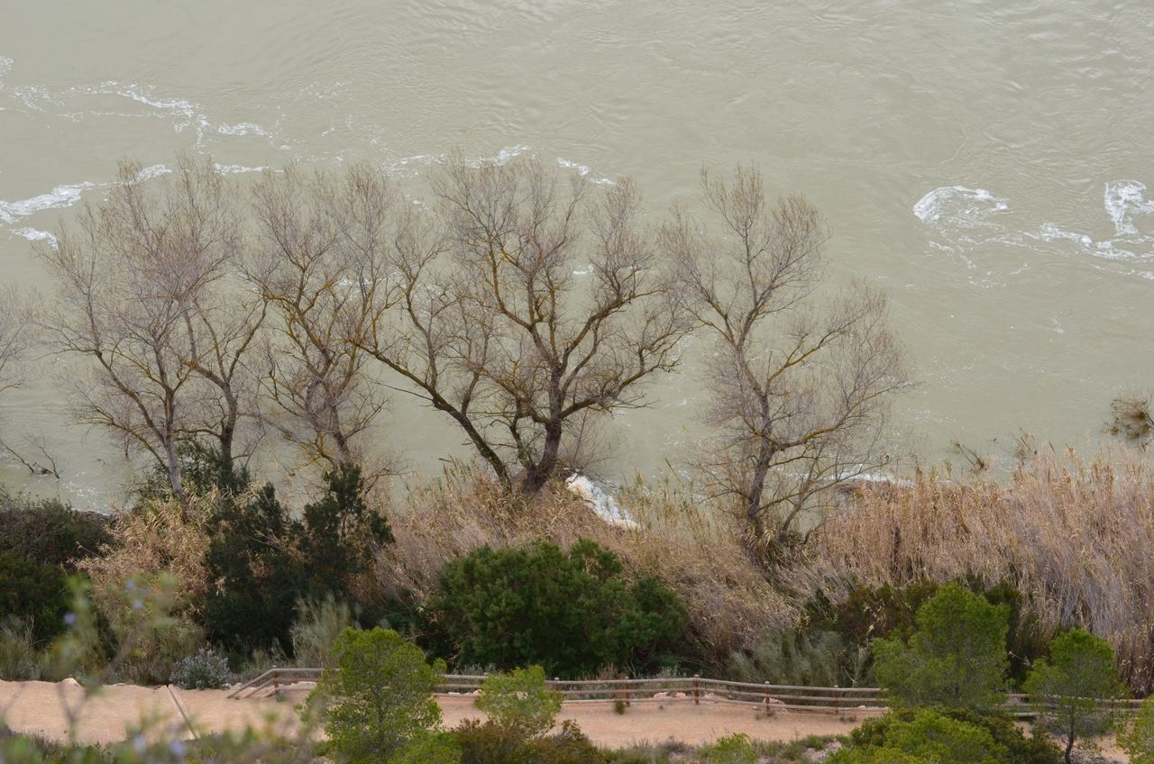 Bare Trees On Landscape Against Water