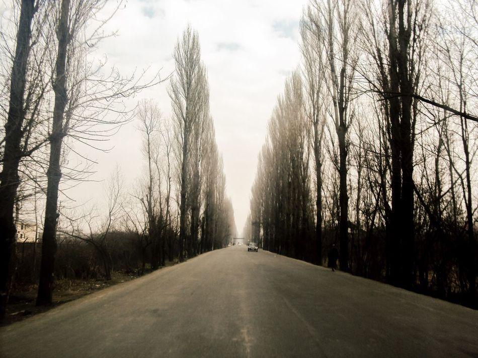 Tree The Way Forward Road Kashmir India Kupwara Beauty In Nature