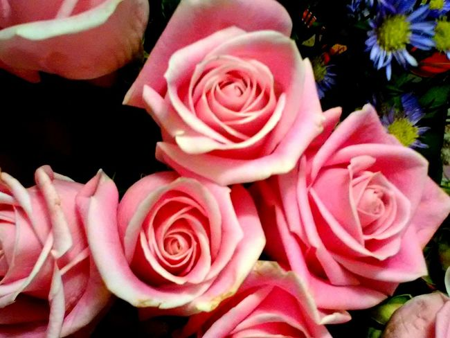 Flower Head Rose - Flower Beauty In Nature Close-up Pink Color Nature Rosé Pink Natural Pattern High Angle View In Bloom Bunch Of Flowers Botany Petal Flower Freshness Hello World ✌ Check This Out 😊 2016♡ Love In The Air Amazing Beauty From My Point Of View My Man Loves Me Roses🌹 Beautiful ♥