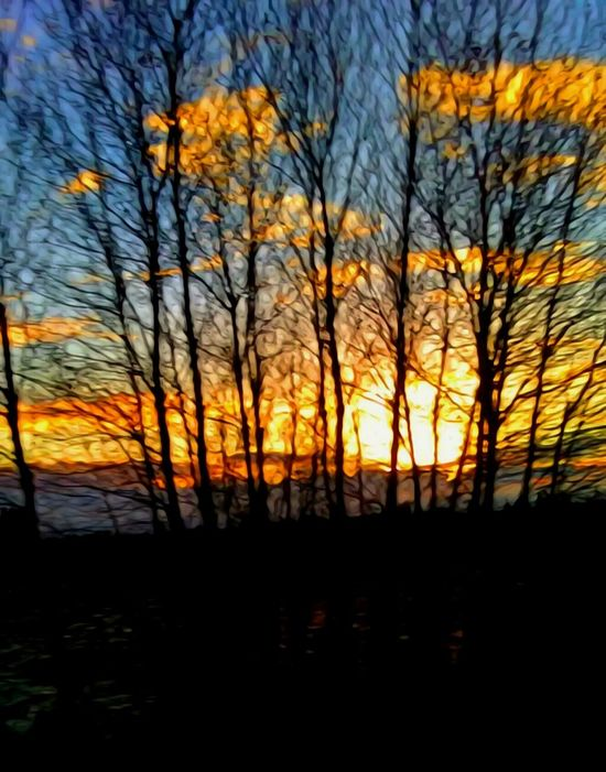 Thee Most Amazing Sunrise!!! Sunrise Sunrise_Collection Sillouette Collection Oregon Sunrise Silhouette Beauty In Nature Bare Tree Scenics Nature Autumn Cloud - Sky Tranquility Tranquil Scene Outdoors Sun Idyllic Oregon Explored The Way Forward Cellphone Photography Cold Temperature Growth My Year My View Fragility Oregon Girl For The Love Of Art Handmade For You