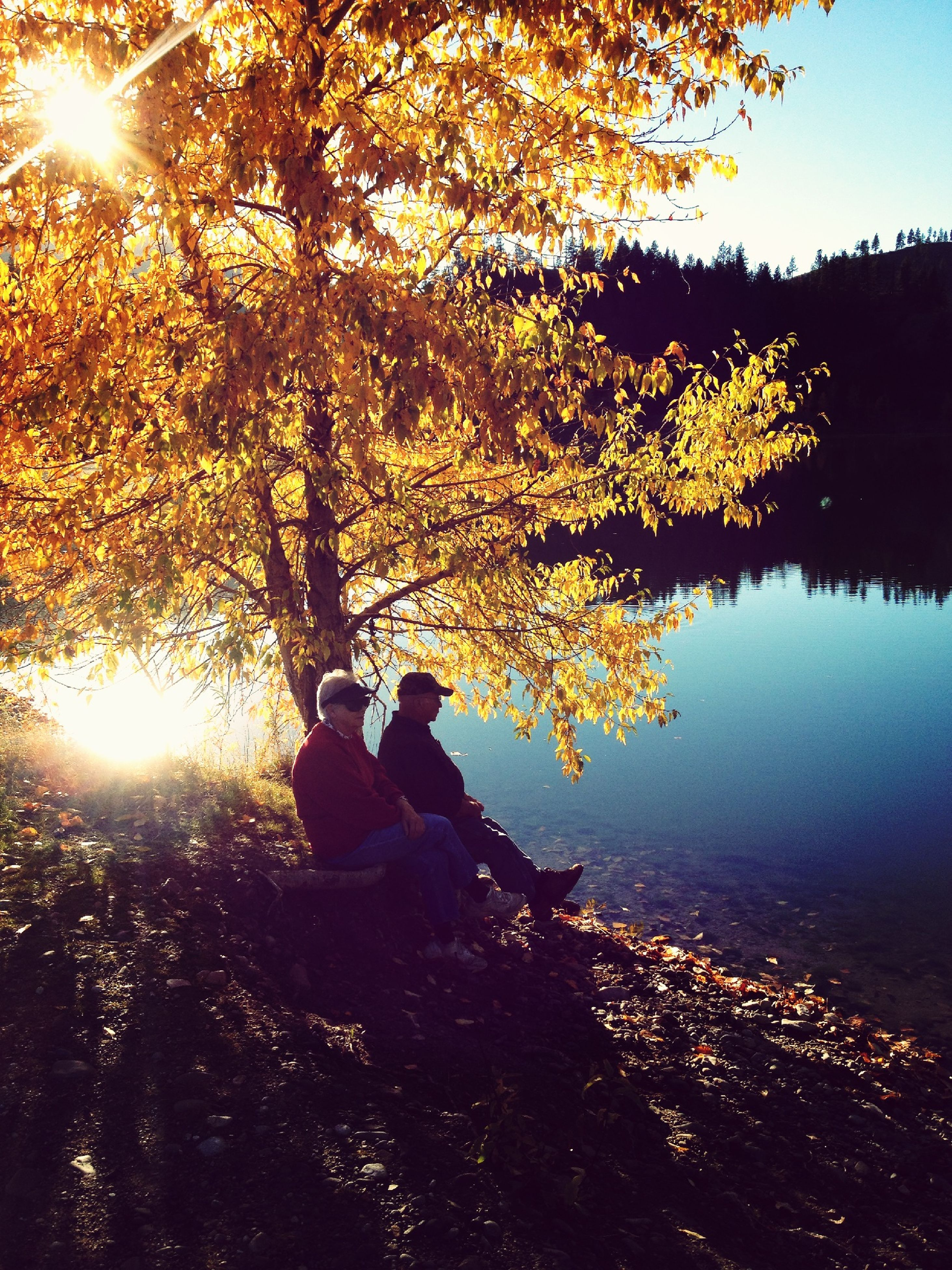 tree, sun, water, sunlight, silhouette, leisure activity, lifestyles, sunbeam, reflection, lake, lens flare, men, sunset, sitting, nature, tranquility, clear sky, rear view