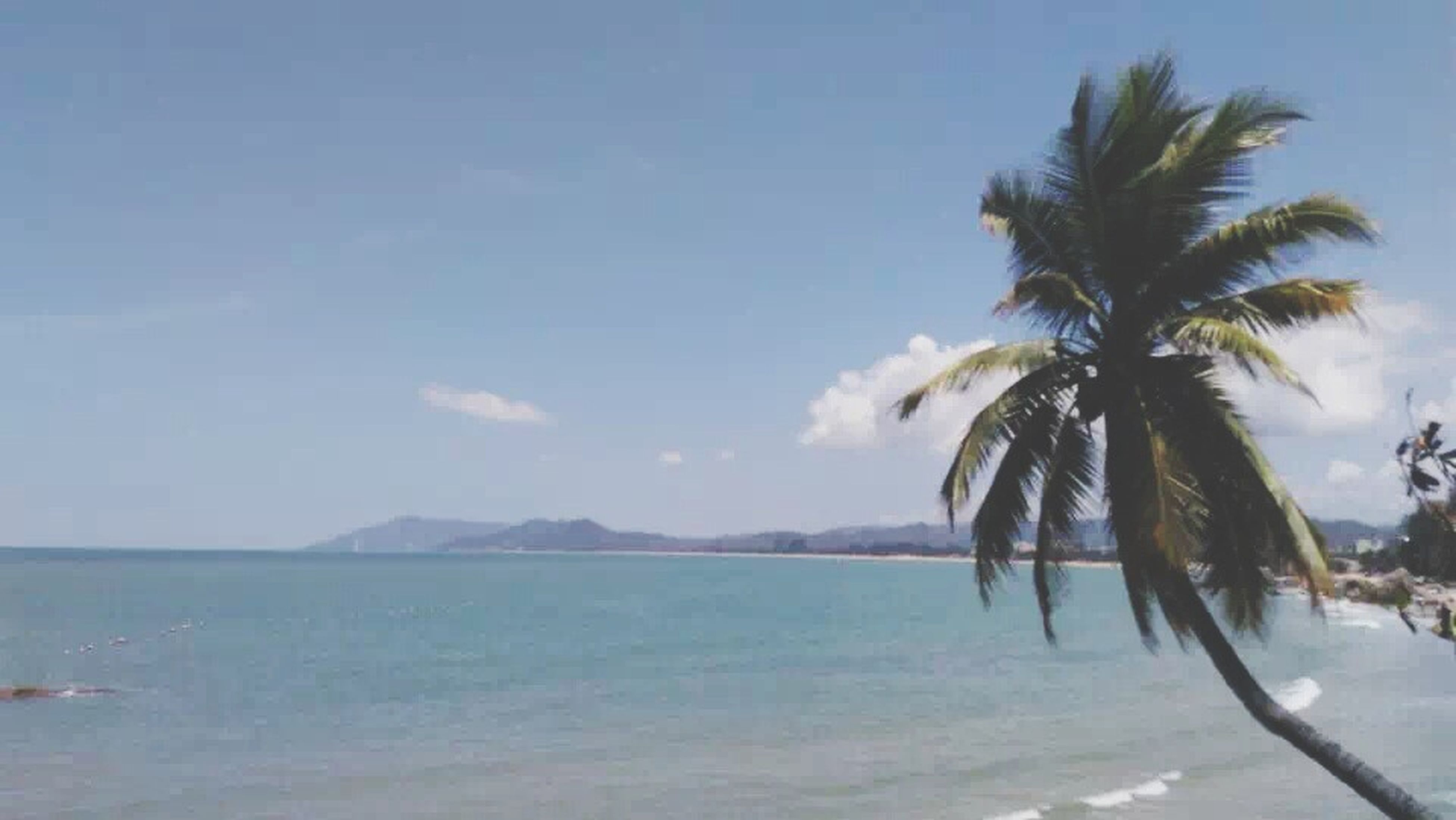 sea, palm tree, water, beach, tranquility, sky, tranquil scene, scenics, horizon over water, beauty in nature, tree, nature, shore, sand, idyllic, day, mountain, outdoors, remote, cloud - sky