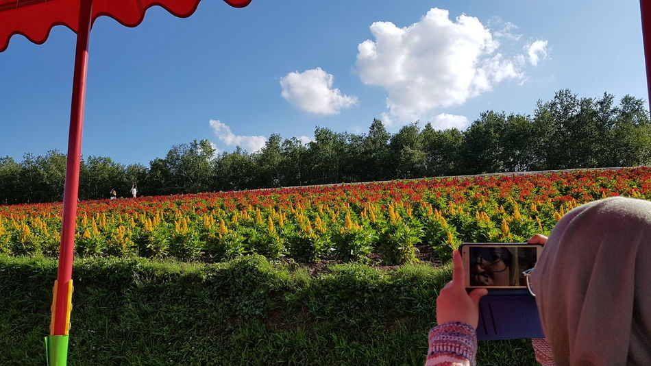 Capturing beautiful flower rows in bloom during summer season at Shikisai no oka, Hokkaido, Japan. Cloud - Sky Sky Growth Outdoors Day Tree Nature Beauty In Nature Summer Travel Destinations Hokkaido,Japan