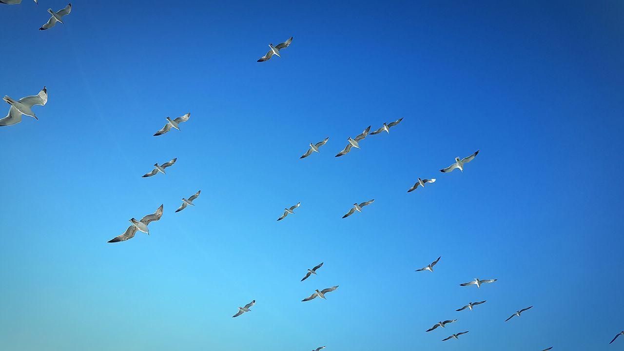 Izmir Turkey Sea Sea And Sky Seatrip Sea Seagulls Seagulls And Sea Gulls In Flight Gulls And Sea Gulls And Sky