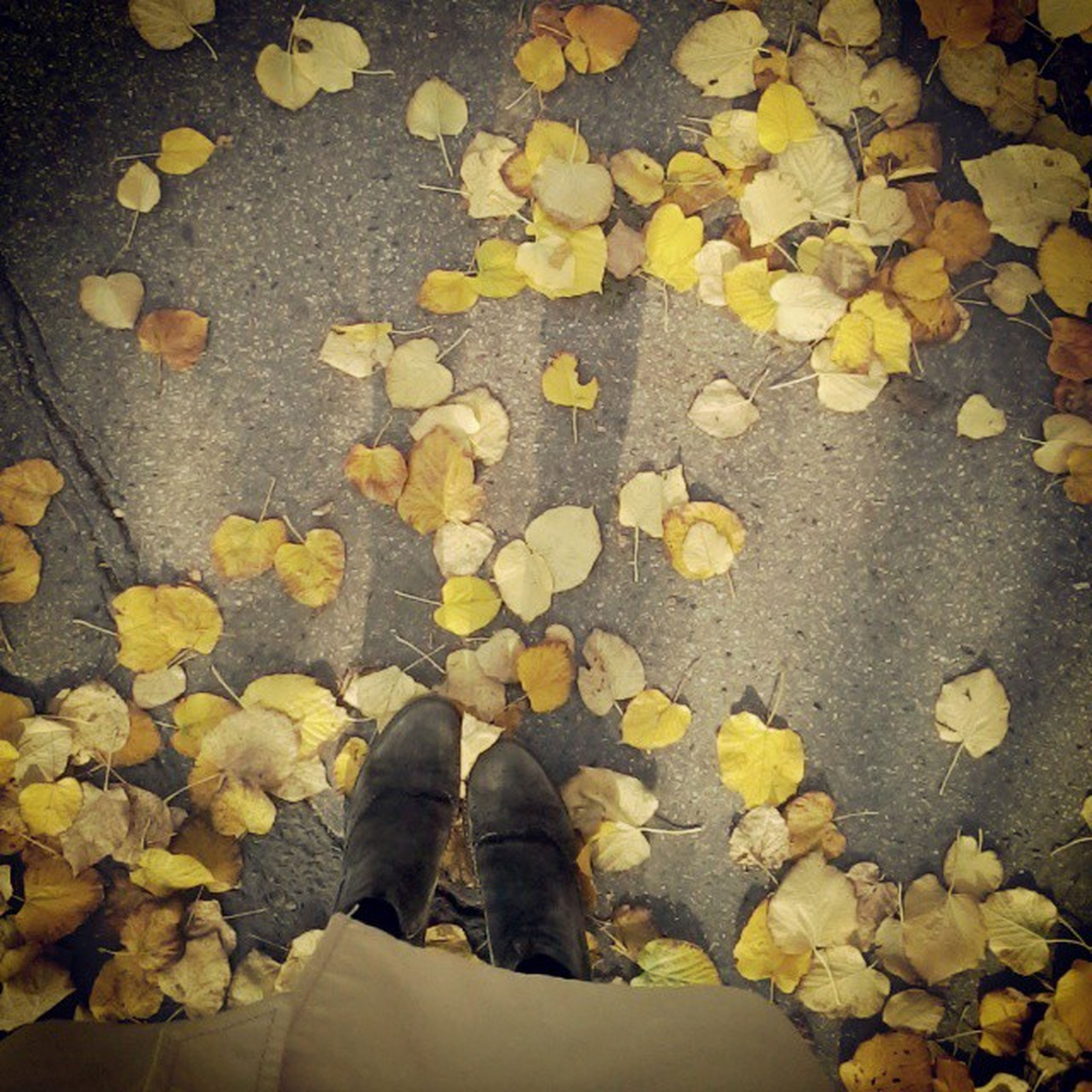 low section, person, shoe, high angle view, standing, leaf, autumn, lifestyles, personal perspective, yellow, men, leisure activity, unrecognizable person, change, season, fallen, leaves