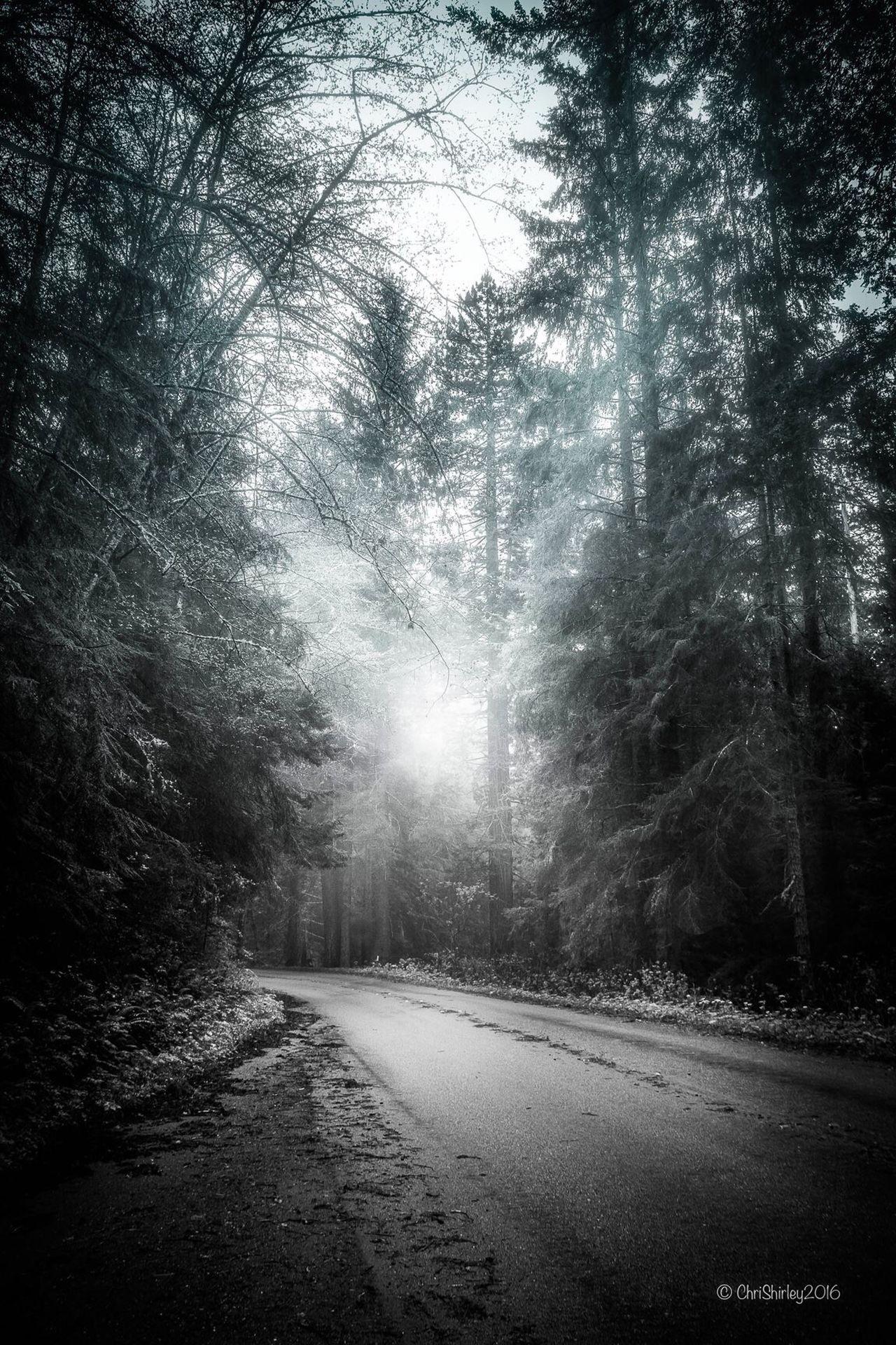 Humboldt County Lostcoast NoCalTrails I❤️hikingNoCal Edgeofthemainland PrairieCreekStatePark InSearchofElk GoneSquatchin
