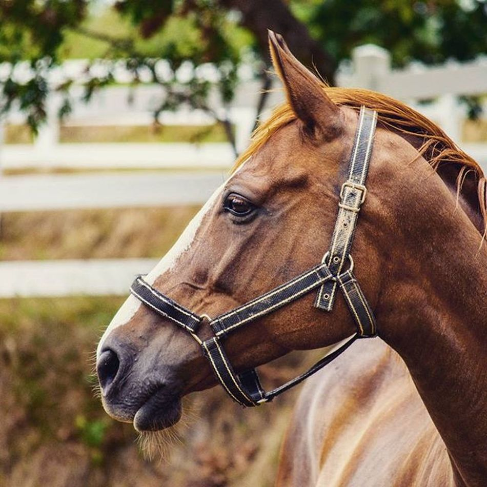 Alnadas Horse Filly Racehorse Mom Mother Chestnut Landscape Nature Naturelovers Animals Animallovers Stable Throughbred Equine Green Paddock