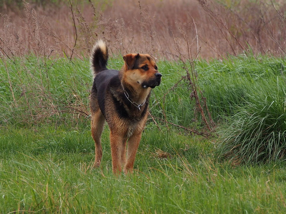 Animal Themes Canine Canine Love :) Canine Photography Canines Day Dog Domestic Animals Grass Growth Mammal Nature No People One Animal Outdoors Pet Pet Photography  Pets