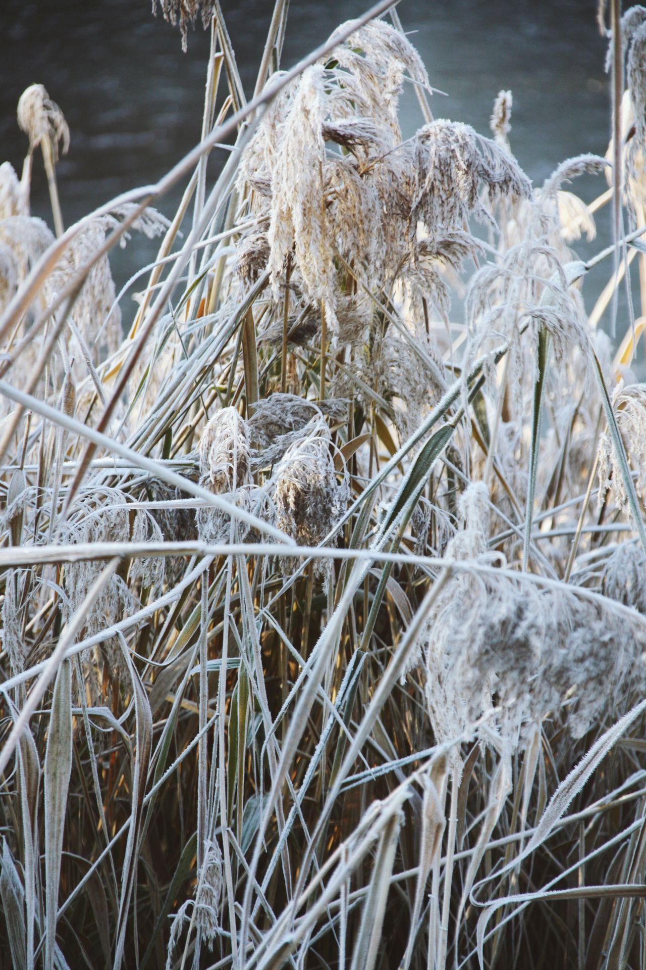 Winter Greens Nature No People Outdoors Grass Day Sunlight Winter Frozen Nature Ice Crystals Frozen Flowers Leaves Lake