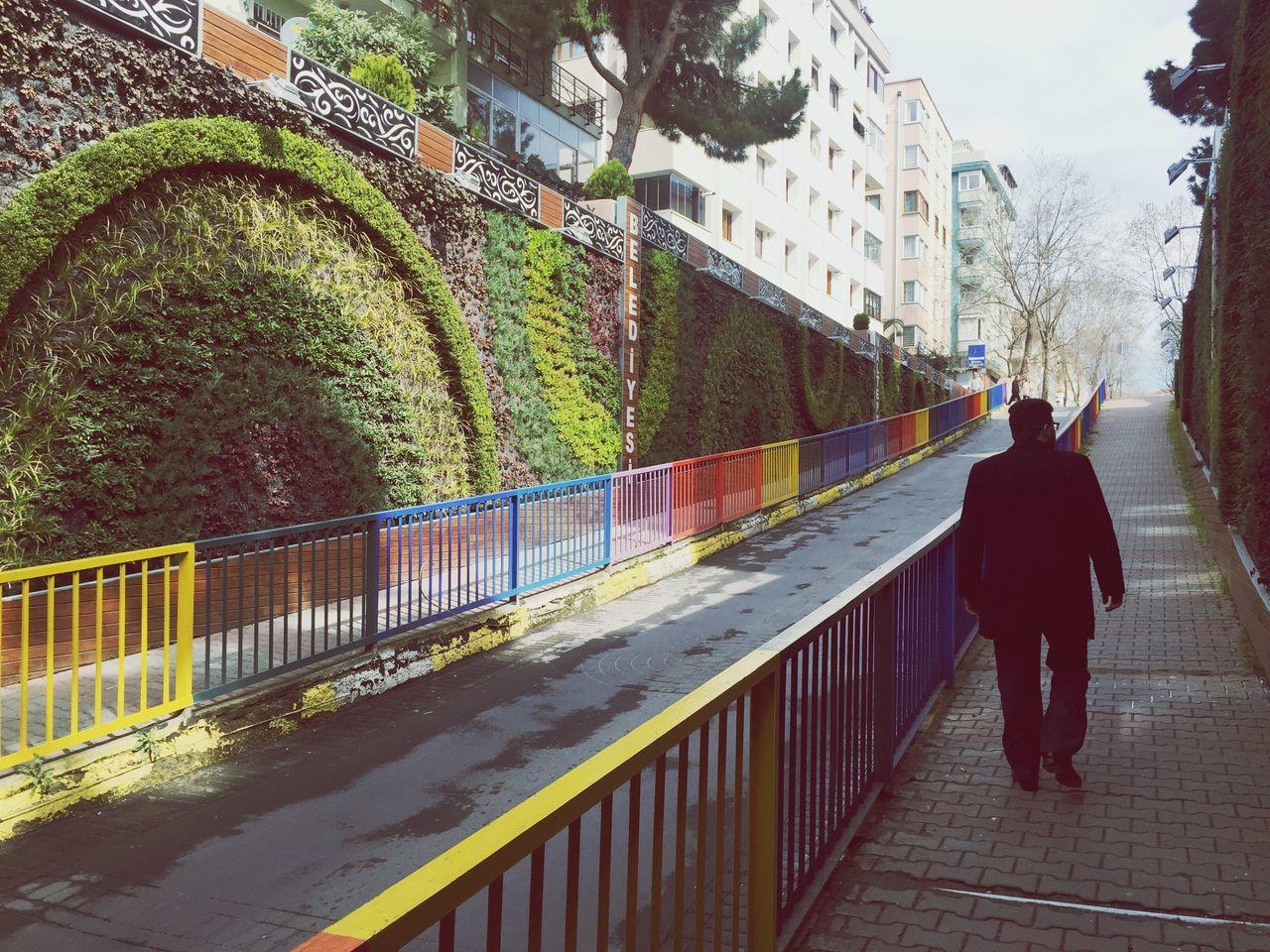 Rainbow street 🙏🏼 Rainbow Rainbow Street Rainbow Fence Into The Wild Wild Life Wildlife & Nature Nature
