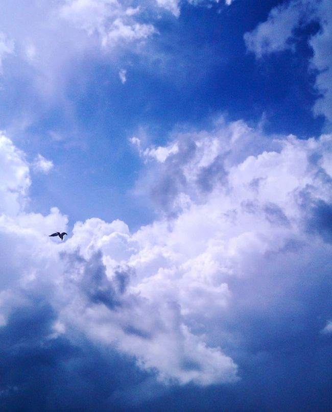 Color Palette Colour Of Life Eyeemphoto Cloudporn Clouds And Sky Gorgeous Photooftheday Travel Ukraine Nikolaev Nature Photography No People Beauty In Nature Nature_collection Sea And Sky Darkness And Light Landscape Naturelovers A Bird's Eye View Nature Clouds Bird Flying Freedom Sun