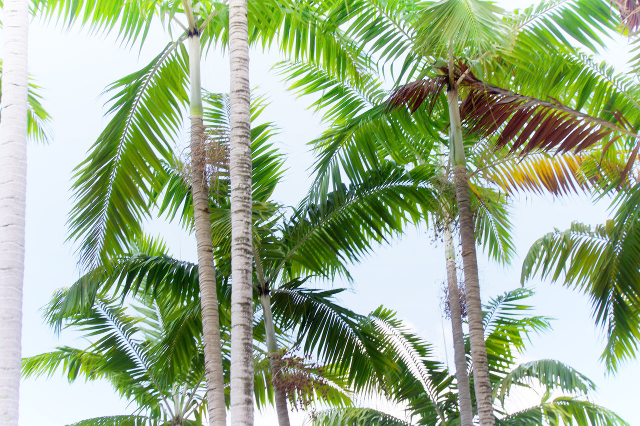 Beauty In Nature Day Green Green Color Growth Leaf Low Angle View Nature No People Outdoors Palm Tree Sky Tree