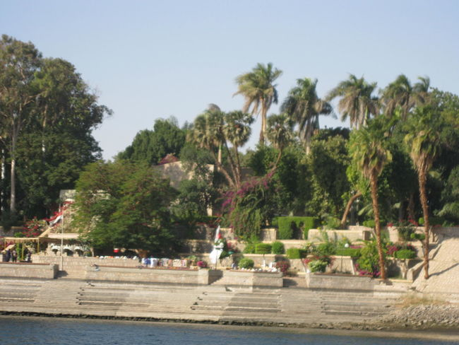 #Aswan #Egypt #NoFilter #Plant Beauty In Nature Palm Tree Tree Water