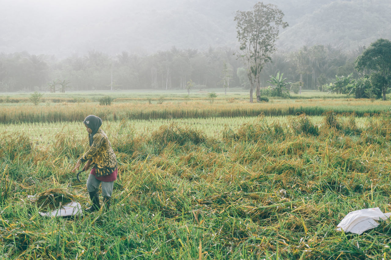 Agriculture Beauty In Nature Day Farm Farmer Field Fog Growth Landscape Nature Occupation One Person Outdoors People Real People Rural Scene Tree Working Paddy Field Paddy EyeEmNewHere Women Around The World The Street Photographer - 2017 EyeEm Awards