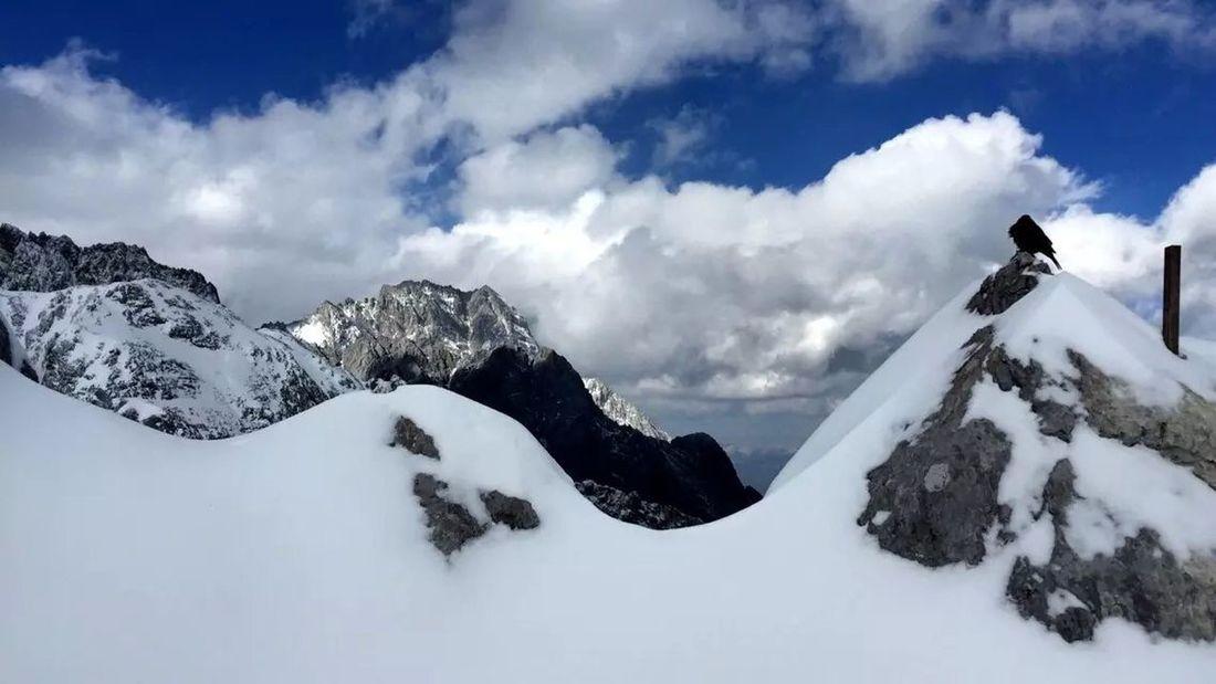 海拔4680米上的山雀