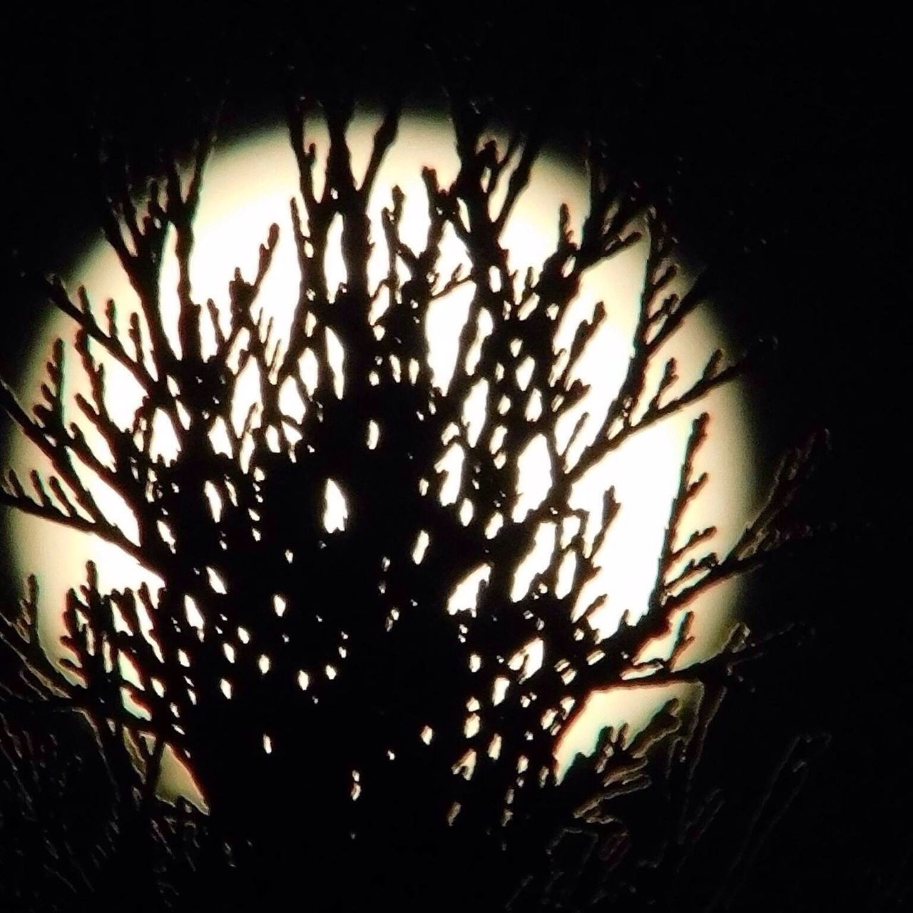 Moon Shots Outdoors Outside Photography Silhouettes Silhouette EyeEm Nature Lover Outdoor Pictures Night Photography Summer Solstice Streamzoofamily Nightphotography Outdoor Photography June 2016 Moon Night Sky New England  Beautiful Nature