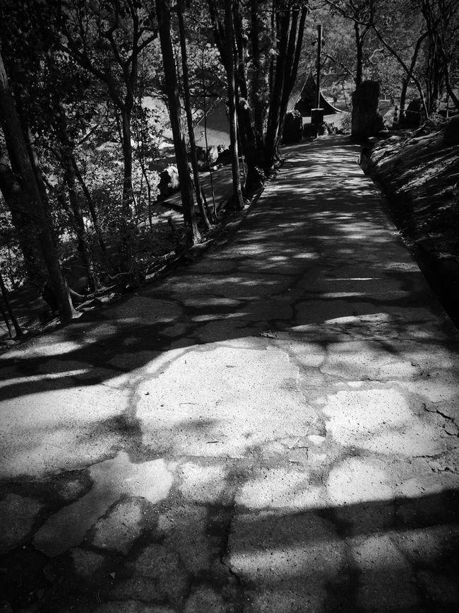Monochrome Shadow