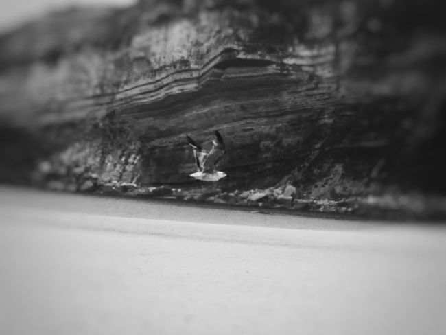FlyLikeBirds PtOlix Blackandwhite Monochromatic Bird Seagull Beach -
