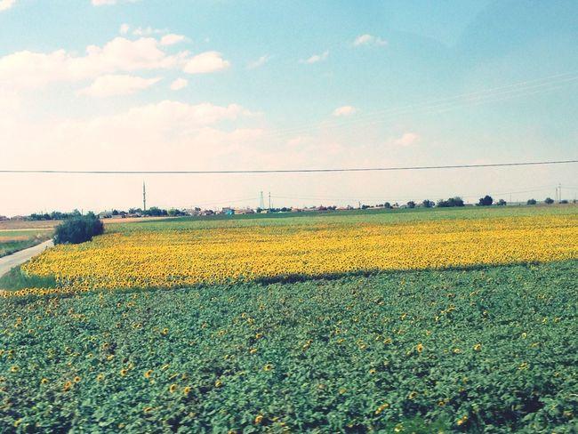 Turkey Sunflower Clouds Field Viewfromthewindow Greenery