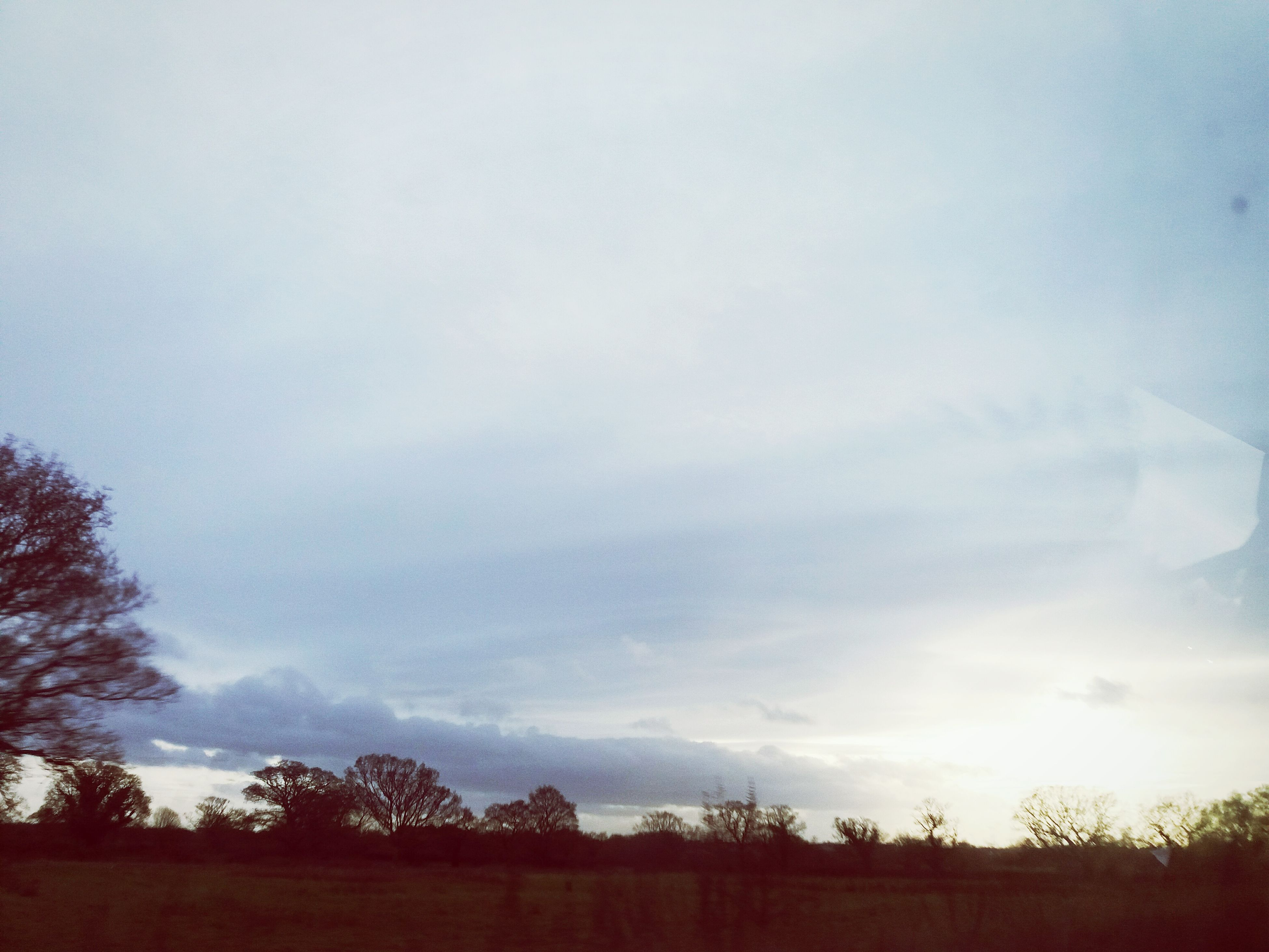 tree, sky, nature, tranquility, tranquil scene, beauty in nature, outdoors, silhouette, no people, low angle view, scenics, cloud - sky, day