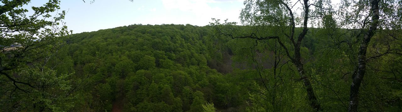 growth, forest, nature, green, flora, vegetation, tree, lush, landscape, no people, outdoors, sky, day