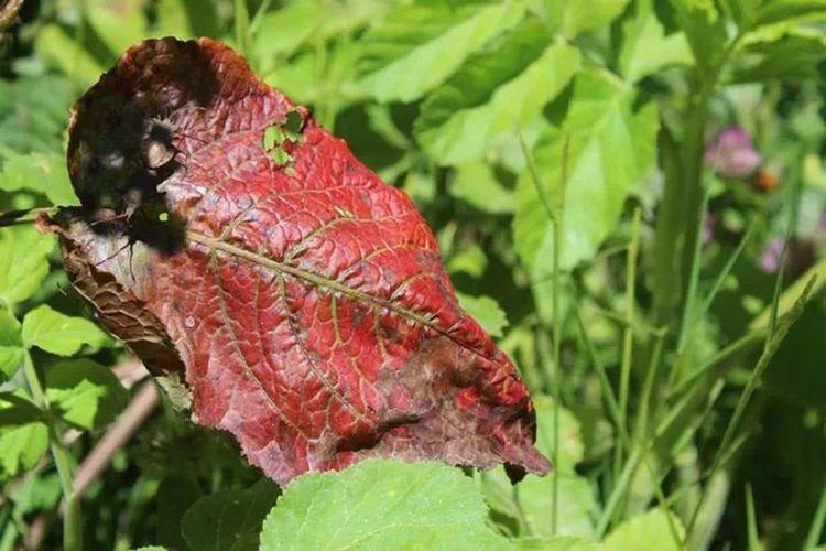 kurumuş bir yaprak.. Eyem Nature Lovers  Red Leaves Spring! Green Green Green!