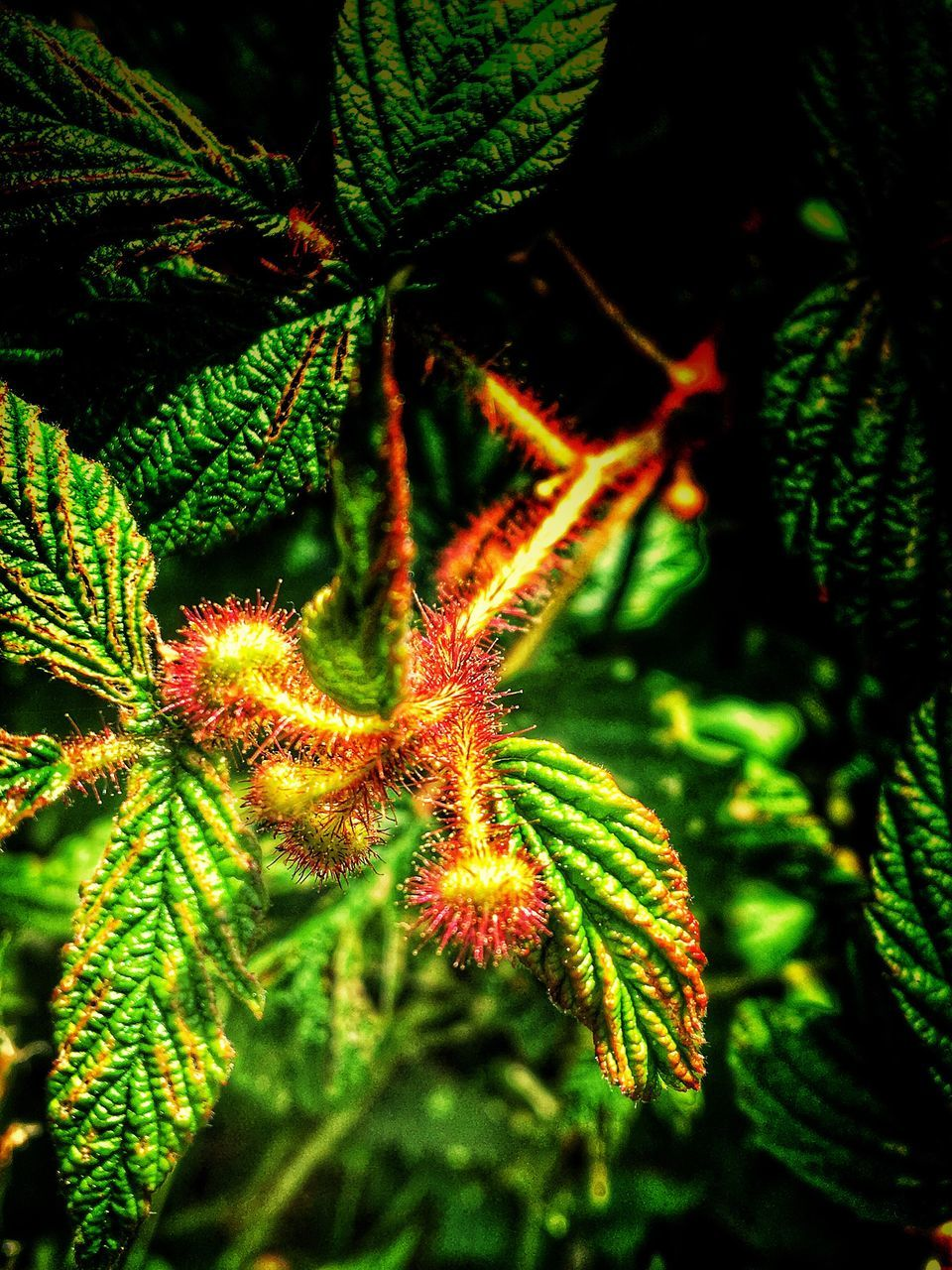 green color, close-up, no people, nature, growth, leaf, outdoors, plant, night, beauty in nature, freshness
