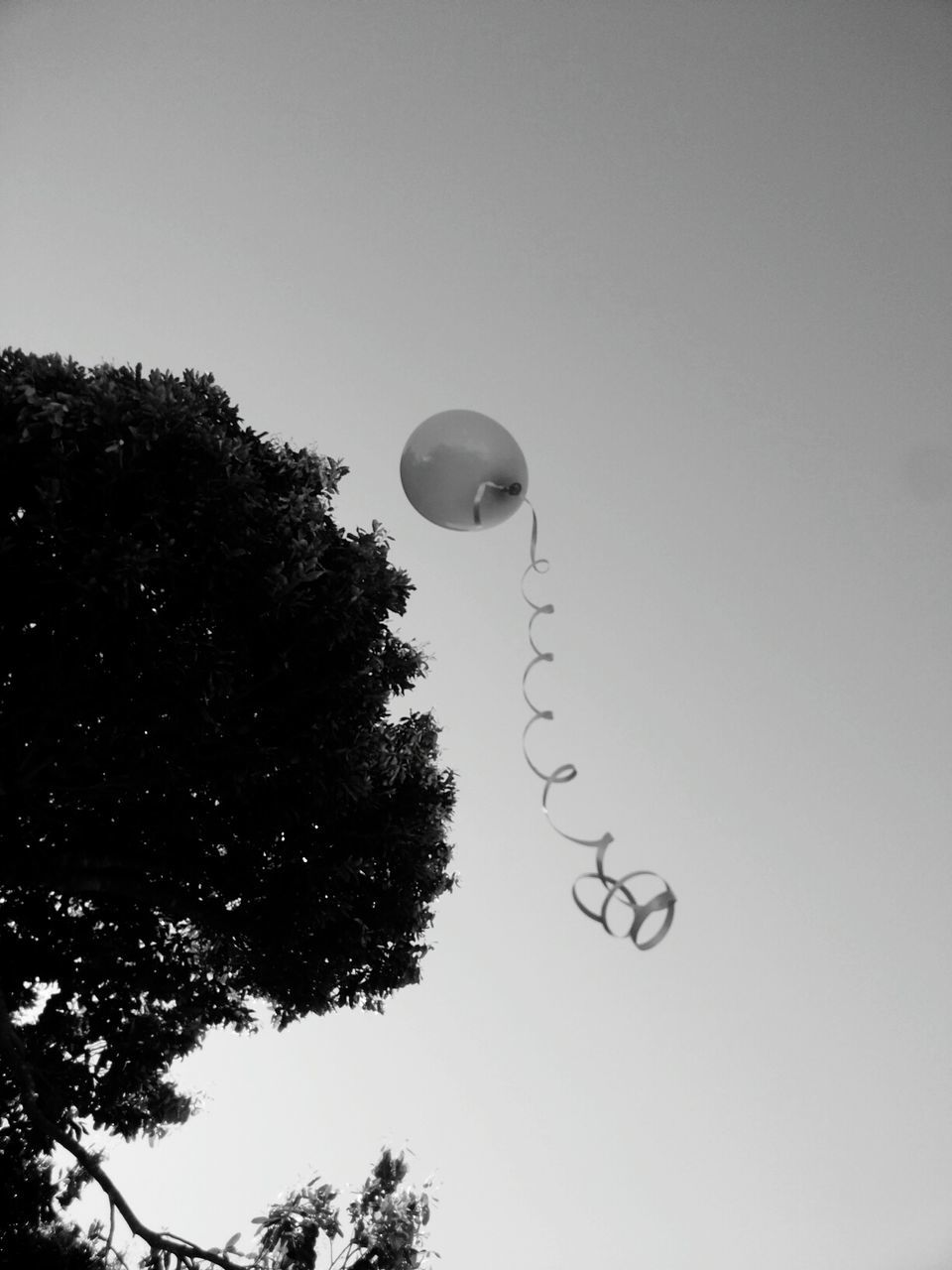 low angle view, tree, no people, mid-air, balloon, flying, clear sky, sky, outdoors, moon, day, helium balloon, nature