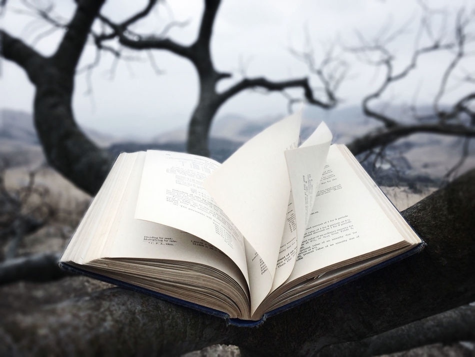 Beautiful stock photos of books, Bare Tree, Book, Branch, Close-Up