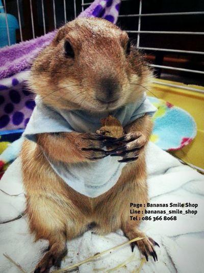 Treats Prairiedog Prairie Dogs Yummy!!