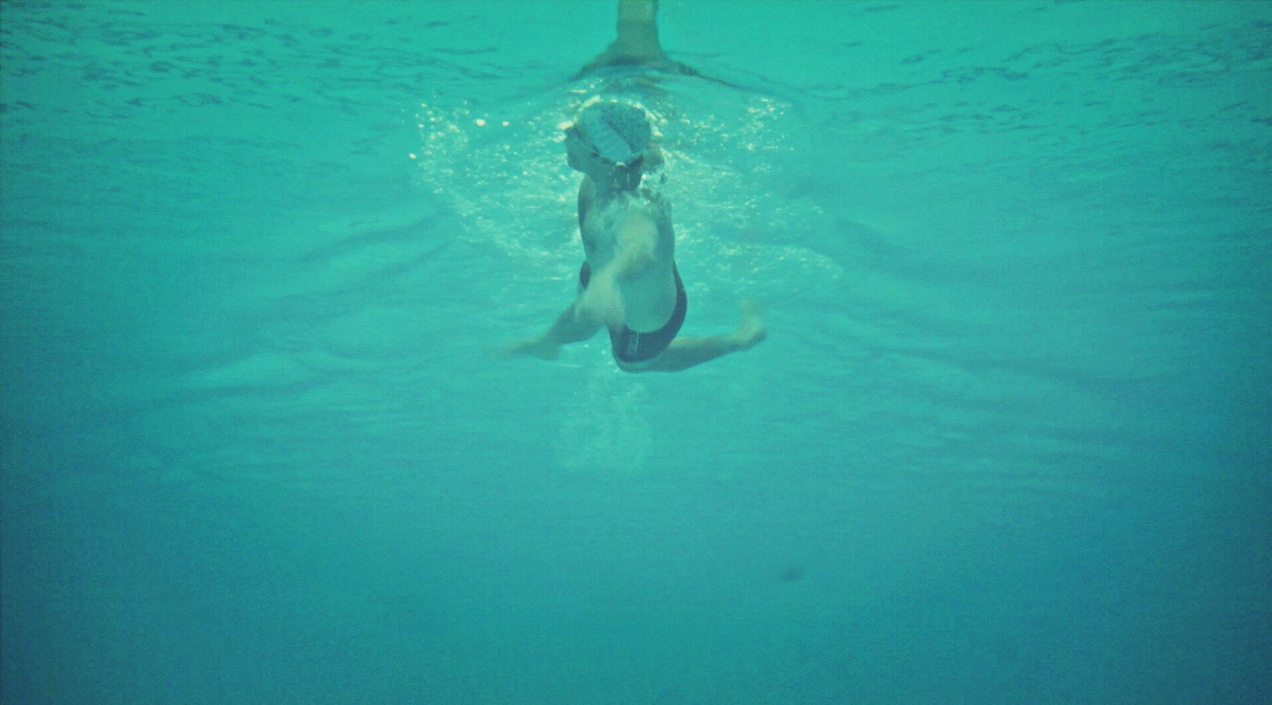 water, swimming, waterfront, sea, blue, full length, underwater, rippled, high angle view, animal themes, wildlife, swimming pool, animals in the wild, leisure activity, motion, one animal, nature, turquoise colored