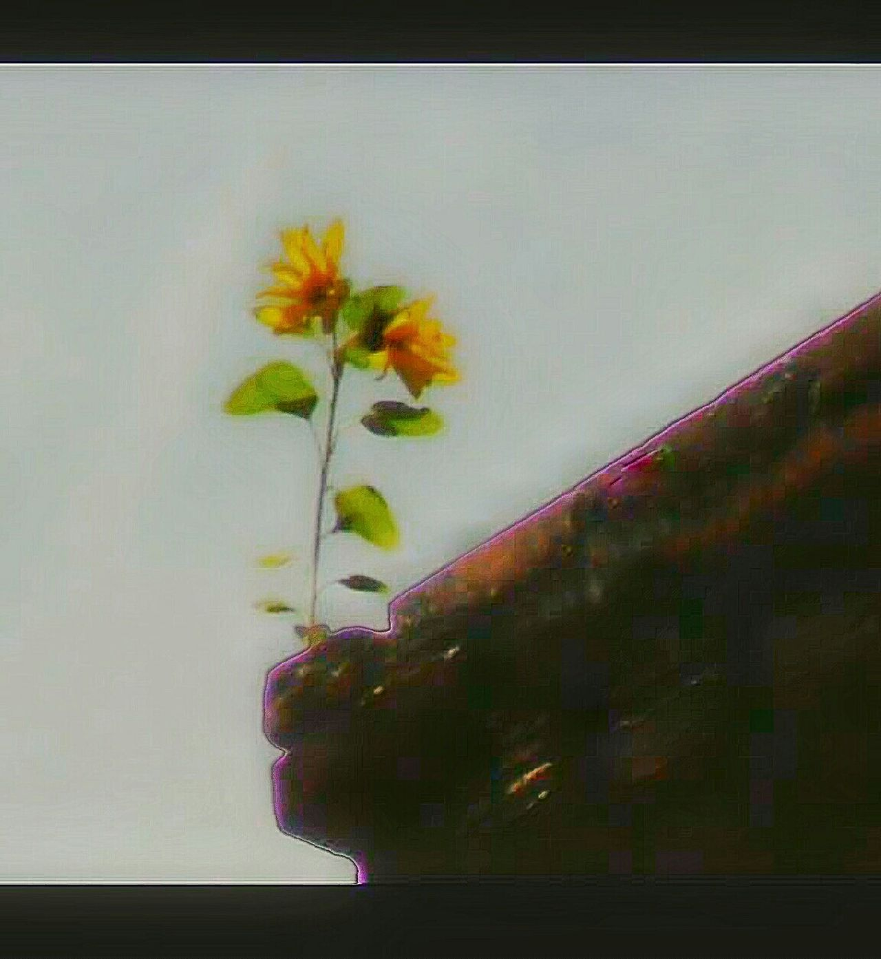 Urban Spring Fever Flower Growing From Chimney Can't Stop Mother Nature Wildflowers Springtime Flowers Of EyeEm Wildflowers Of Eyeem Outdoor Photography Nature Photography Building Building Structure 4 Stories Up Sun Flower Yellow Flowers