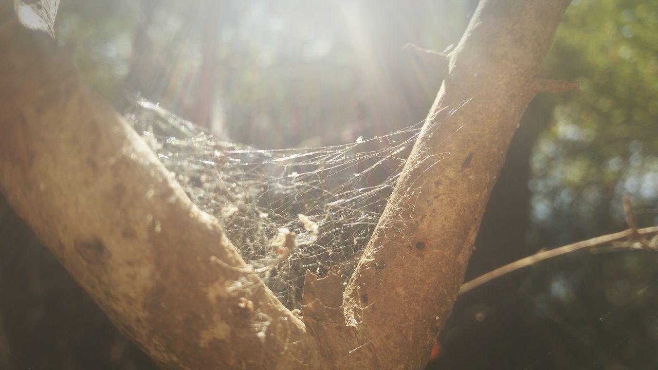 Spiderweb Spider EyeEm Nature Lover Nature Nature Photography Nature_perfection Urban Nature