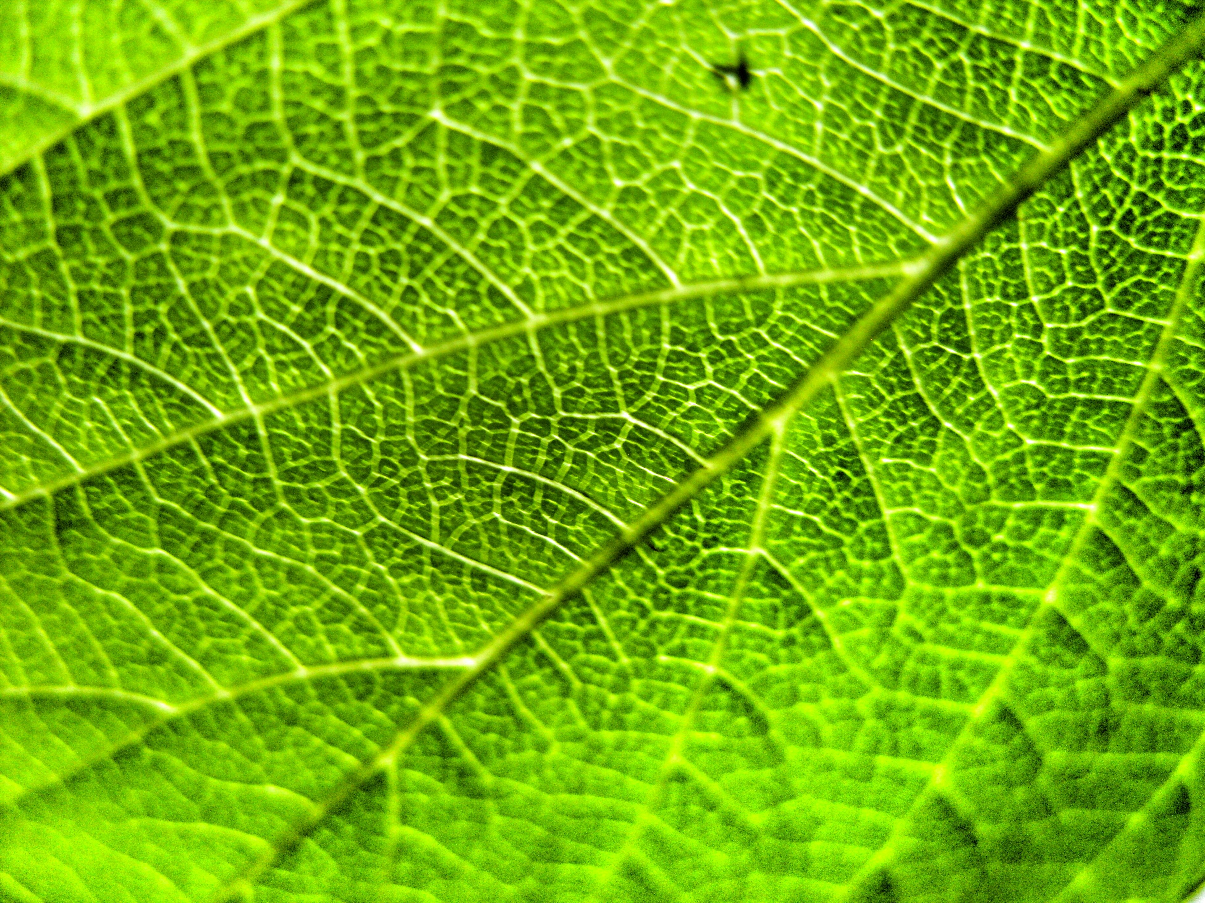 green color, leaf, leaf vein, natural pattern, full frame, close-up, backgrounds, nature, growth, pattern, beauty in nature, plant, freshness, green, high angle view, outdoors, day, no people, fragility, tranquility