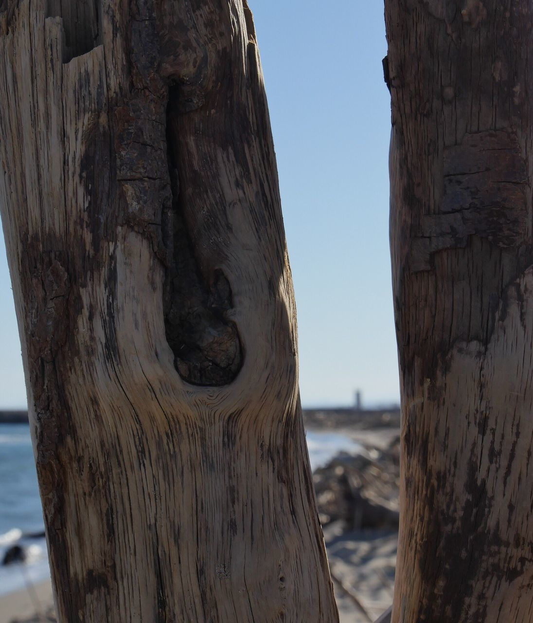 wood - material, focus on foreground, day, no people, outdoors, tree trunk, nature, close-up, water, beauty in nature, sky, tree
